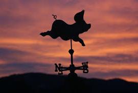images (1)pig